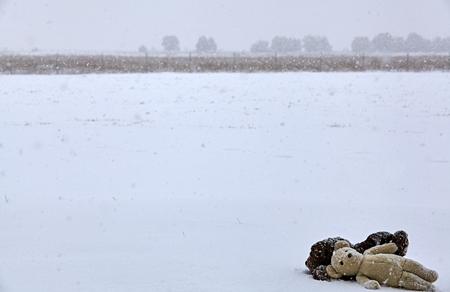 snow storm: Teddy bears in field of snow in snow storm