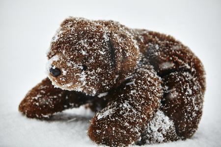 snow storm: Teddy bear in snow storm