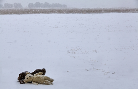snow storm: Two teddy bears laying together  in snow storm