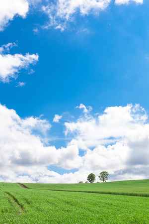 grassland: Meadow Stock Photo