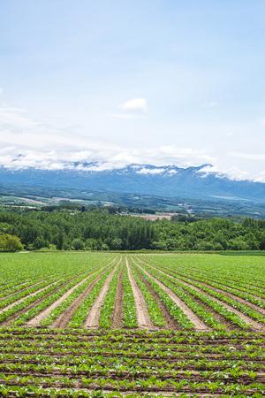 Field and Tokachi mountain range