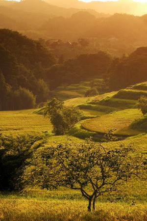 crop margin: Country evening landscape