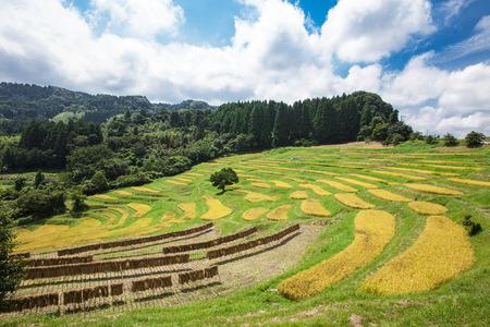 Rice Terrace 写真素材 - 87390409