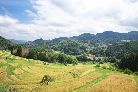 Rice Terrace 写真素材 - 87742069