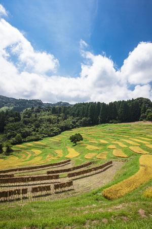Rice Terrace 写真素材 - 88153709