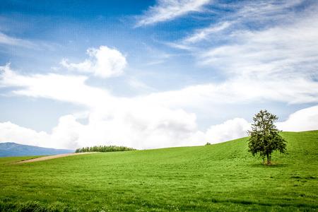 草原 写真素材 - 100372493