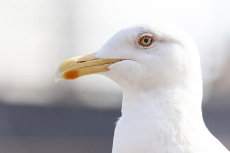 Seagull 写真素材 - 102930864