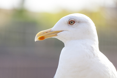 Seagull close up 写真素材