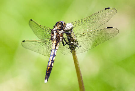 Dragonfly close up 写真素材