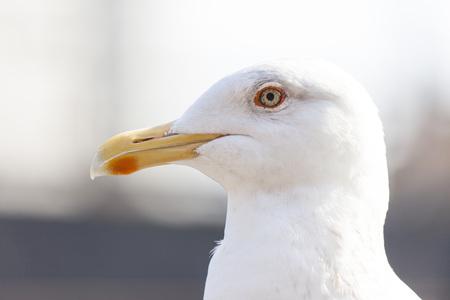 Seagull 写真素材