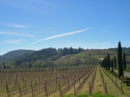 View of vineyard in Sonoma Stock Photo