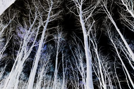 Negative image of trees and sky