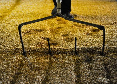 Raking malted barley Stock Photo