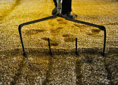 Raking malted barley Stock Photo