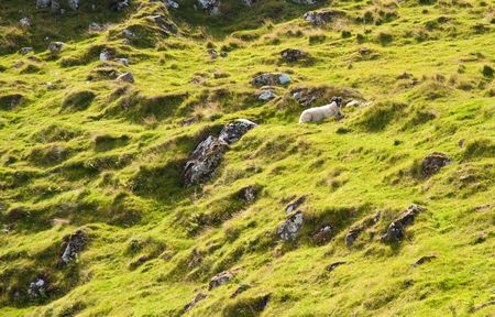 Isle of Skye hillside, Scotland