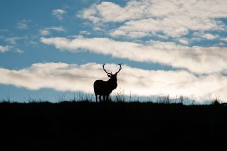 Deer in Jura field photo