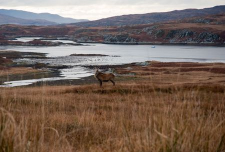Deer in Jura field Stock Photo