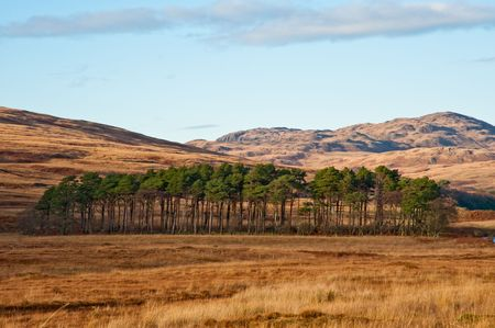 Grove of trees on the isle of Jura, Scotland