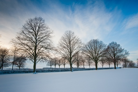 Trees and snow photo