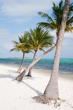 cayman: Beach on Little Cayman Island
