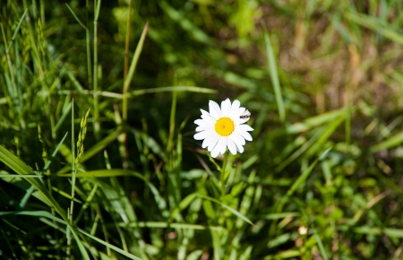 discovery: Daisy in Discovery Park