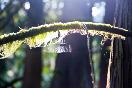 Moss covered branch and spider web Stock Photo - 15117429