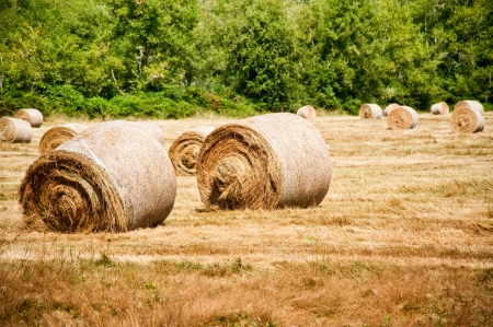 Bales of hay in a field Stock Photo - 15117541