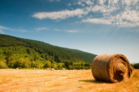 Bales of hay in a field Stock Photo - 15117496