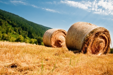 Bales of hay in a field photo