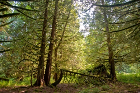 Trees in a wooded forest Stock Photo