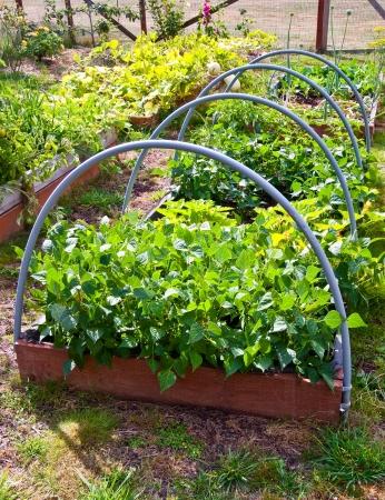 Vegetable garden Stock Photo - 17082516