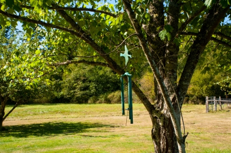 Wind chimes hanging from a tree Stock Photo - 17082521