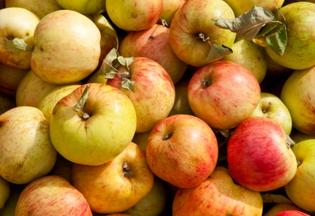 Apples Stock Photo - 17861223