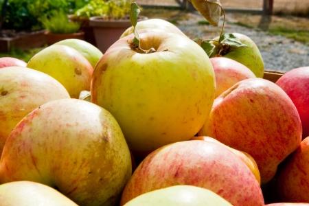 Apples Stock Photo - 17861213