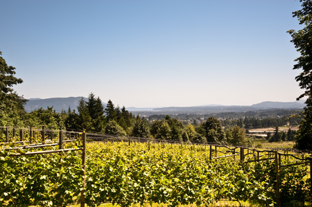 Vineyard on Vancouver Island, BC Stock Photo