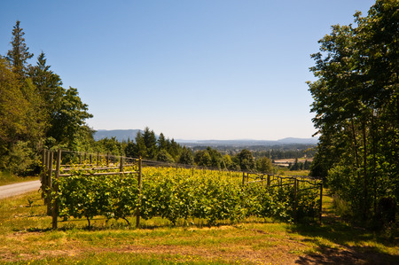 bc: Vineyard on Vancouver Island, BC Stock Photo