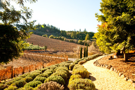 Vineyard in Sonoma, California Stock Photo
