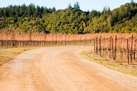 sonoma: Vineyard in Sonoma County, California Stock Photo