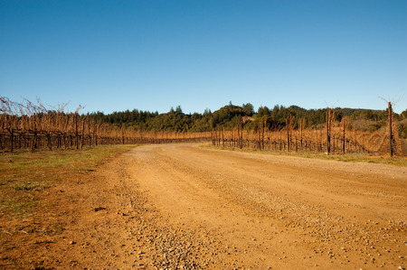 Vineyard Standard-Bild