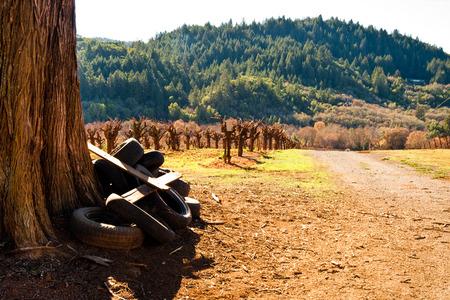 Vineyard in Sonoma County, California Standard-Bild