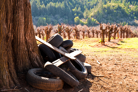 Vineyard in Sonoma County, California Stock Photo