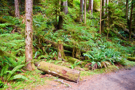 crescent: Trees near Lake Crescent in the Olympic Peninsula, WA state Stock Photo