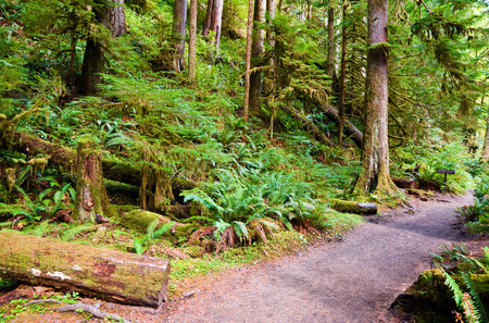 in wa: Path to Marymere Falls in the Olympic Peninsula, WA state