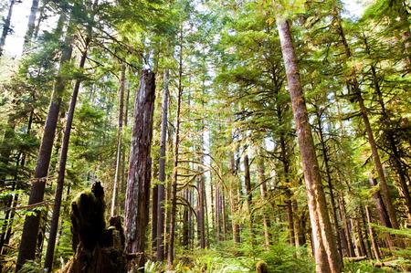 crescent lake: Trees near Lake Crescent in the Olympic Peninsula, WA state Stock Photo