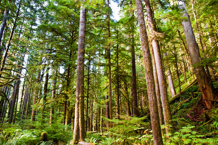 in wa: Trees near Lake Crescent in the Olympic Peninsula, WA state Stock Photo
