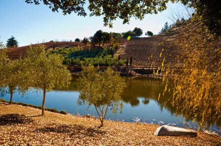 sonoma: Vineyard and pond in Sonoma CA