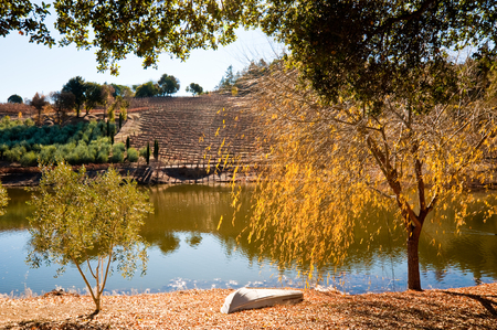 Vineyard and pond in Sonoma CA