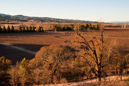 Vineyard in Sonoma California Фото со стока