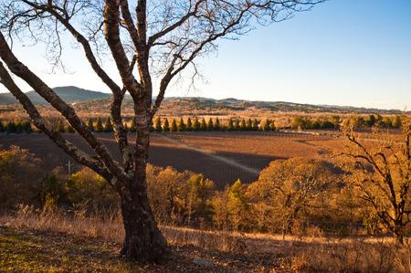 Vineyard in Sonoma California Stock Photo