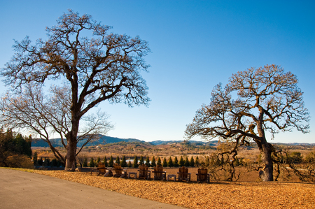 Landscape in Sonoma County, CA Standard-Bild
